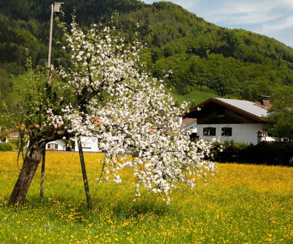 Frühling in Ruhpolding